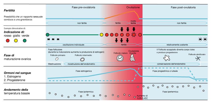 Tabella medico scientifica contraccezione e procreazione