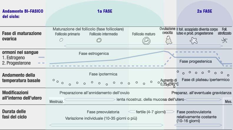 Temperatura basale ciclo bifasico